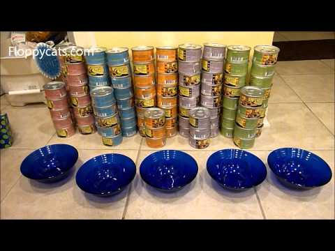 ragdoll-cats-receive-lotus-cat-food-just-juicy-canned-cat-food-ねこ-ラグドール-floppycats