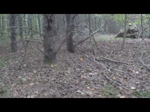 Scouting Trip In Uwharrie National Forest