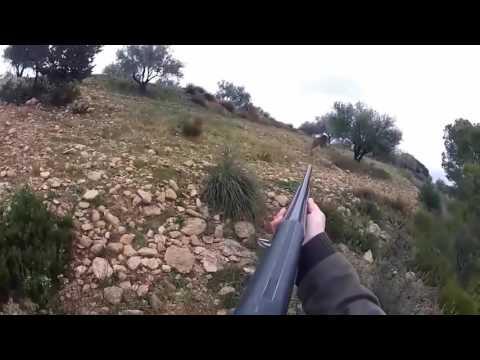 Лучшие моменты охоты