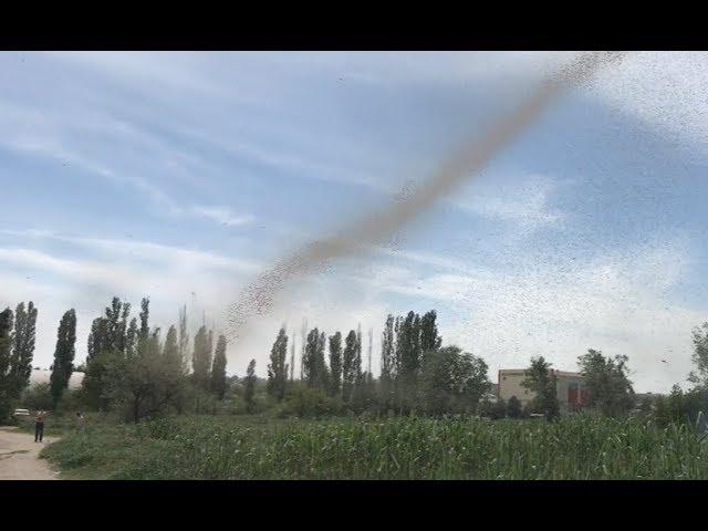 A Giant Mosquito Tornado
