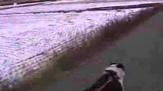 犬のしつけと訓練、自転車Dog's discipline, training, and bicycle tra...