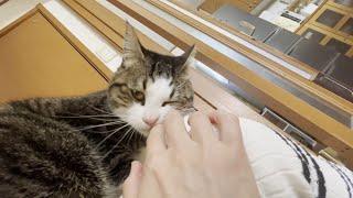 外出を察知して「行かないで攻撃」をはじめる猫