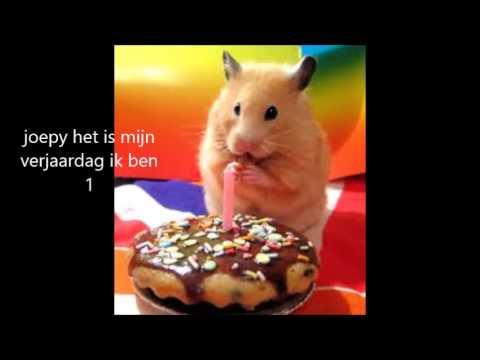 Mijn Filmpje Over Hamsters Youtube