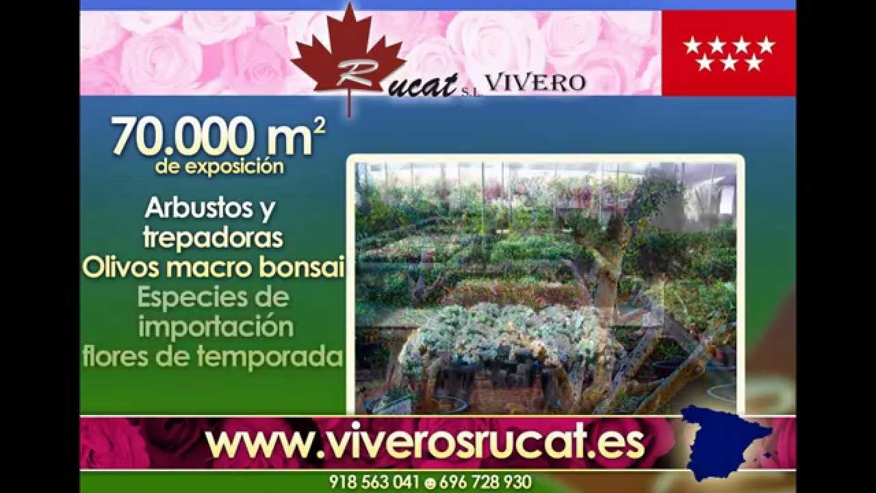 Viveros madrid viveros rucat vivero madrid youtube for Viveros madrid sur