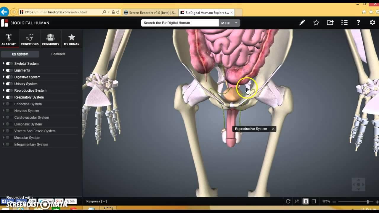 Simuladores del cuerpo humano en 3D - YouTube