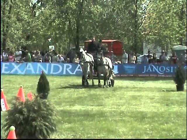 zsana horse