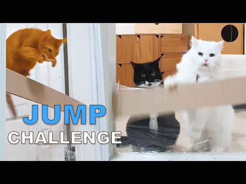Jump Challenge (Cat Noah Vs Lizzy, Invisible Wall)