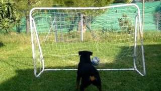 This Video Previously Contained A Copyrighted Audio Track. Due To A Claim By A Copyright Holder, The Audio Track Has Been Muted.     Rottweiler History