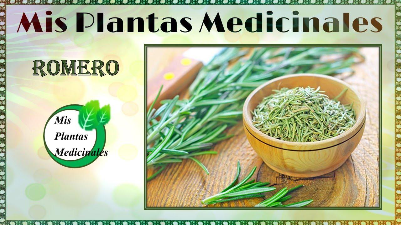 Para que sirve el romero propiedades medicinales y for Planta decorativa propiedades medicinales