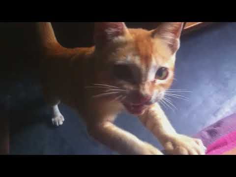 My funny cat videos / My Favorite Cat / My Golden Cats