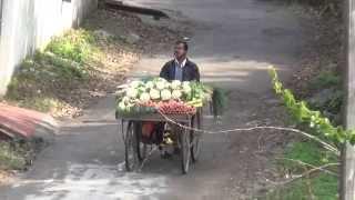 Loud Vegetable Vendor