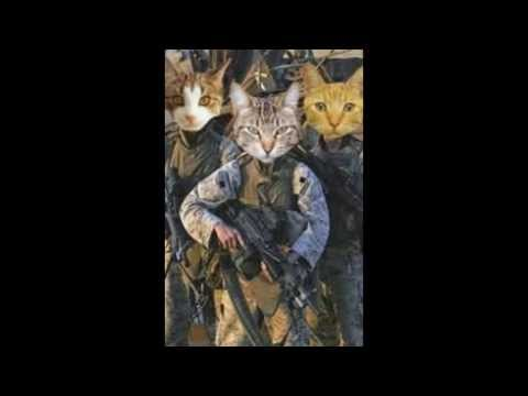 ARMY CATS