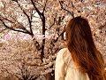 オリジナル曲「さくらシルエット」MV_Charme Renard