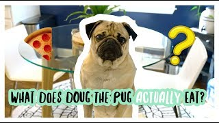 What Does Doug The Pug ACTUALLY Eat?
