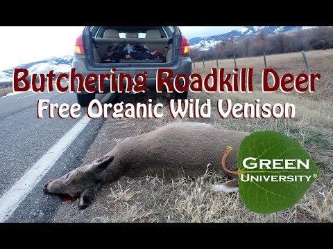 Butchering Roadkill Deer: Free All Natural Organic Wild Venison