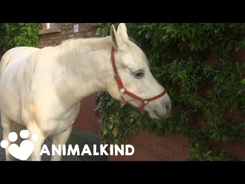 Beautiful Horse Is The Star of Her Tiny German Town | Animal