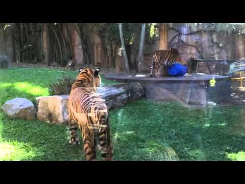 Spot & Stripe at Australia  Zoo