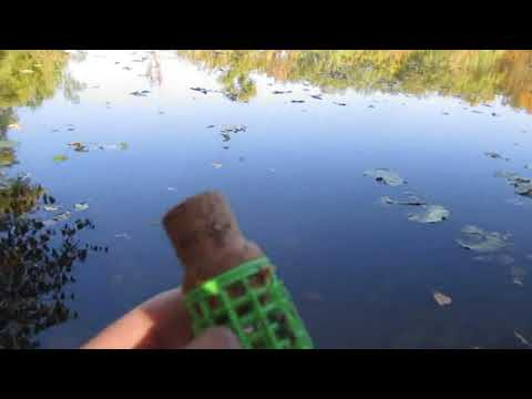 Испытание плавающей кормушки  Озеро Ореховое