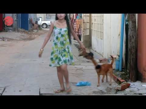 Popular Cute Baby Dog Playing with Smart girl in Home – Beautiful girl and Smart Puppy Dog