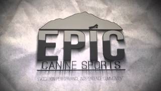 Epic Canine Sports Logo Reveal