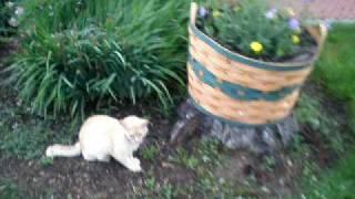 White Boxer Puppy Vs Stray Cat