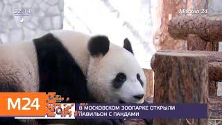 Смотреть видео Павильон с пандами открыли в Московском зоопарке - Москва 24 онлайн