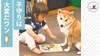 パズルをする子供を見守るワンコ👀✨ この後…(笑)【PECO TV】 thumbnail