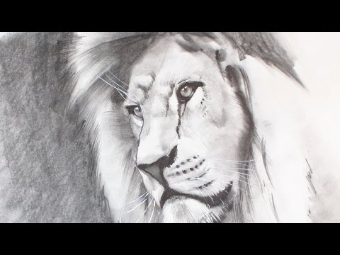 how-to-draw-a-realistic-lion