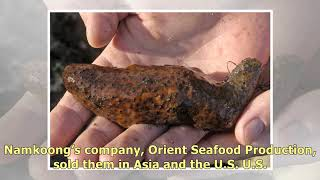 Washington Man Gets Prison For Overharvesting Sea Cucumbers