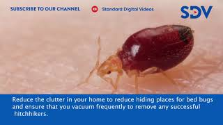 simple-and-easy-precautions-that-will-help-prevent-bed-bug-infestation-in-your-home