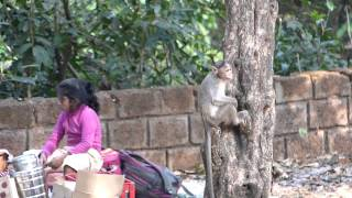 Monkeys & Spice Farm in Goa, India, Music: Bongo Bongo by Manu Chao