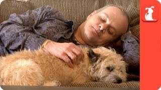 Healing Power of Pets: Veteran finds companion in service dog