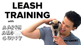 PetSmart Puppy Training: Loose Leash Training