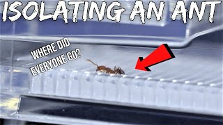 QUARANTINING AN ANT FROM ITS WHOLE COLONY | Sad Reaction