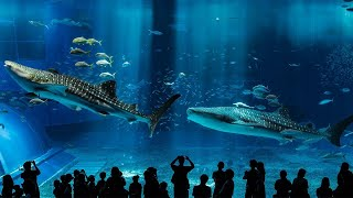 Here are the Most Amazing Aquariums Around the World!