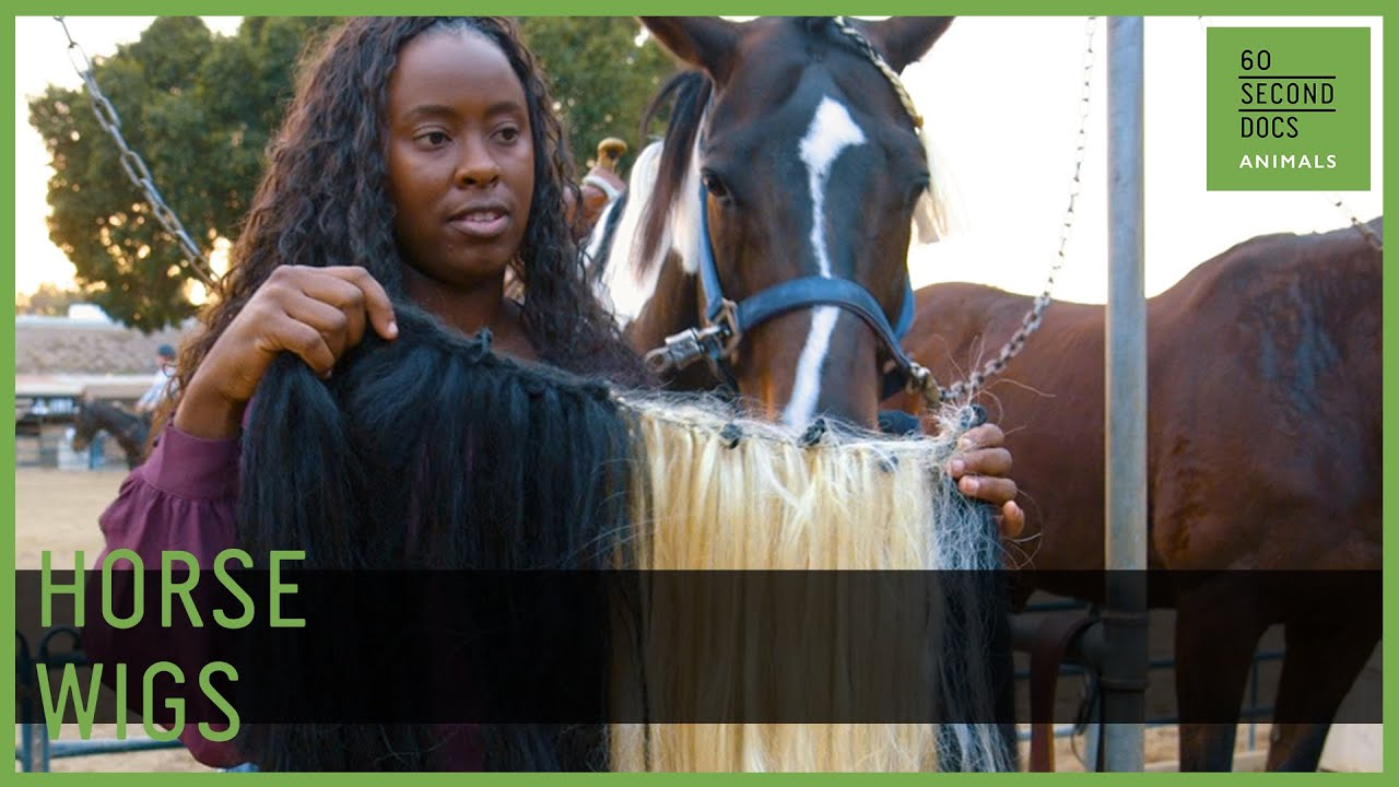 She Makes Wigs For Horses