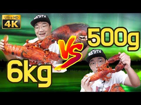 랍스타 6.2KG VS 500g  비교 먹방 리뷰