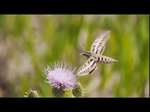 Beautiful Butterflies and Flowers - Flowers and Butterflies in Nature Video