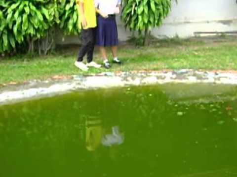 การสะท้อนคลื่นน้ำ