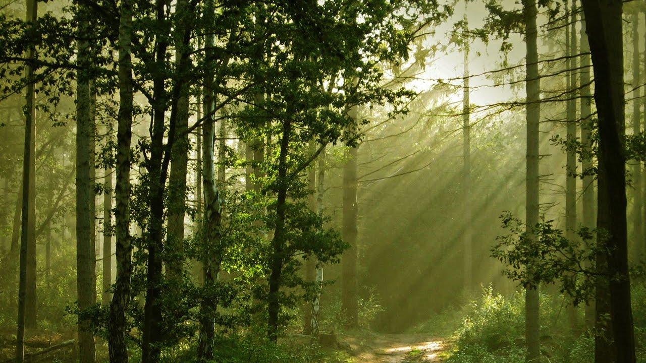 Скачать звук шорох в лесу