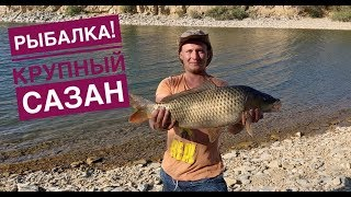 Рыбалка на сазана,карпа Крупный сазан,карп!Бешеный клев Сазана на рака!