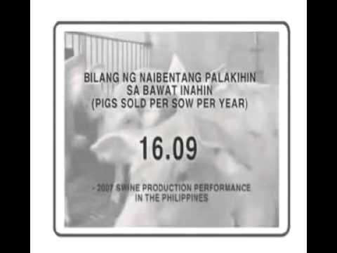 Usapang Baboy Market Pig module part 16 Sukatan ng Matubong Pag aalaga ng Palakihing Baboy