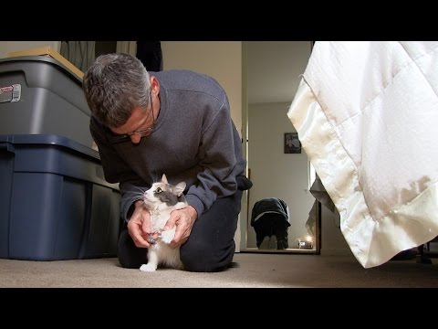 TRIMMING CAT CLAWS!  |  CUTE CRAZY FUNNY CATS