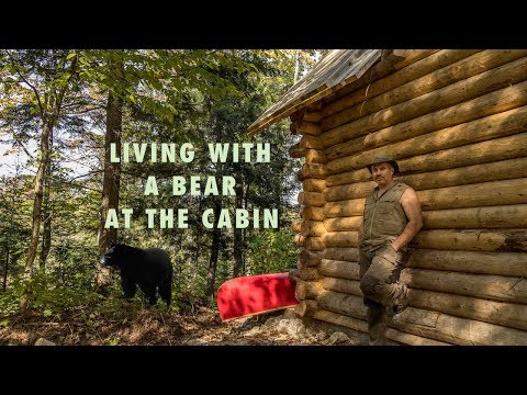 Living with a Blackbear at the Cabin in the Forest and Installing Windows