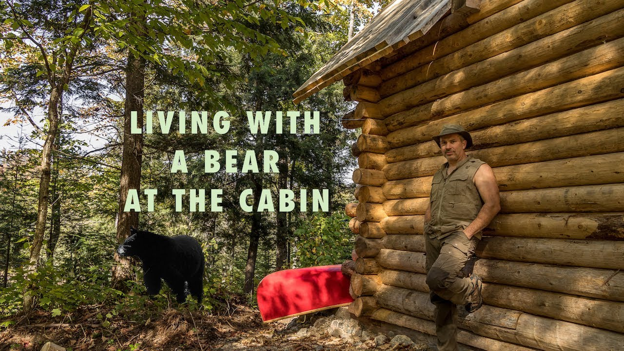 living-with-a-blackbear-at-the-cabin-in-the-forest-and-installing-windows