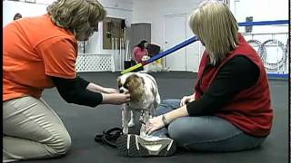 Family Dog Center Of Illinois - Crystal Lake, Il - Dog Training Facility Overview
