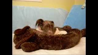 Pixels Docked Tail Pain Interrupts Fun - No Tail Left Behind 2012.wmv