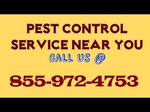 Pest Control Services In Phoenix - Arizona Pest Service Near Me