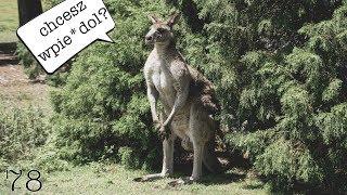 POLAK POBITY PRZEZ KANGURA SYDNEY AUSTRALIA