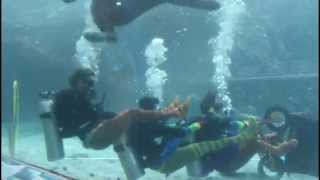 Circus under the Sea at Reef HQ Aquarium Thumbnail